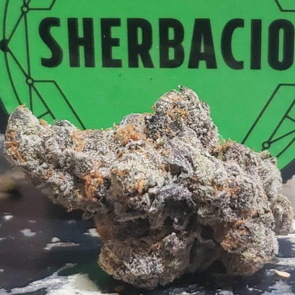 buy sherbacio strain